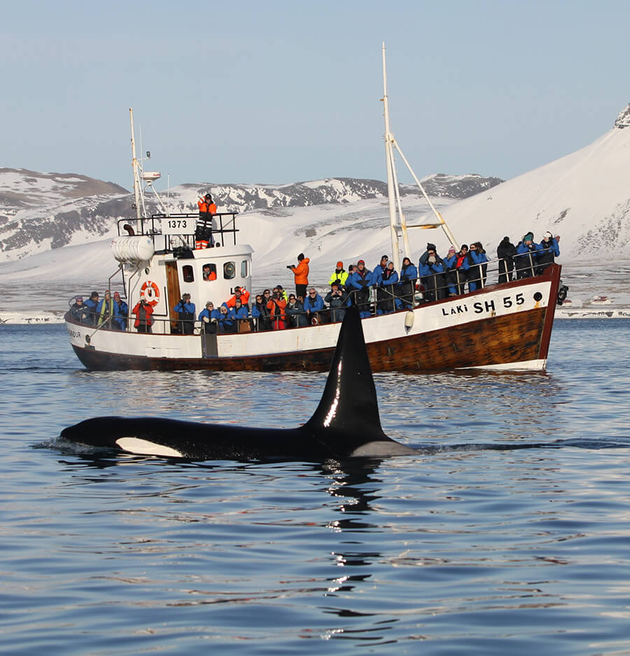 our whale watching boats in iceland