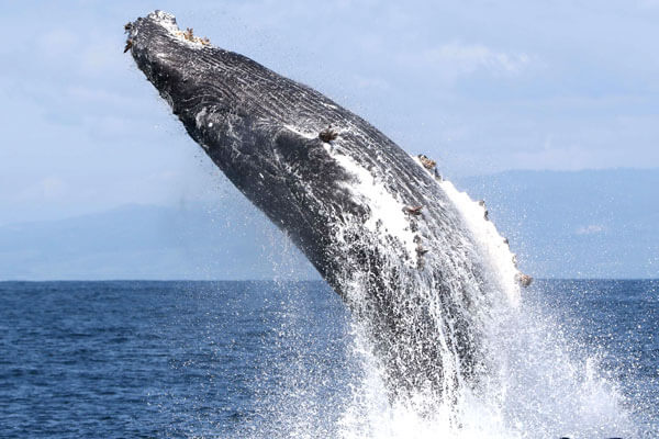 lki - Picture Of A Whale