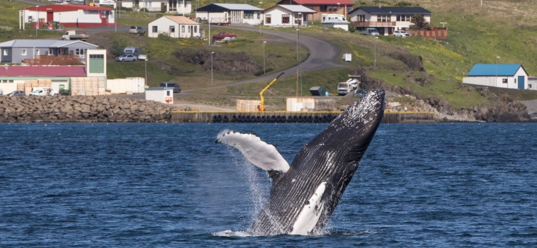 Jumping whales in both our locations!