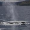 020818 humpback blow