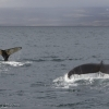 030918 2 whales close