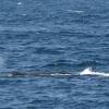 0408 sperm whale blow