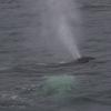050918 humpback close blow
