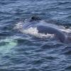 090818 humpback Holmavik am