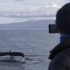 090918 close humpback