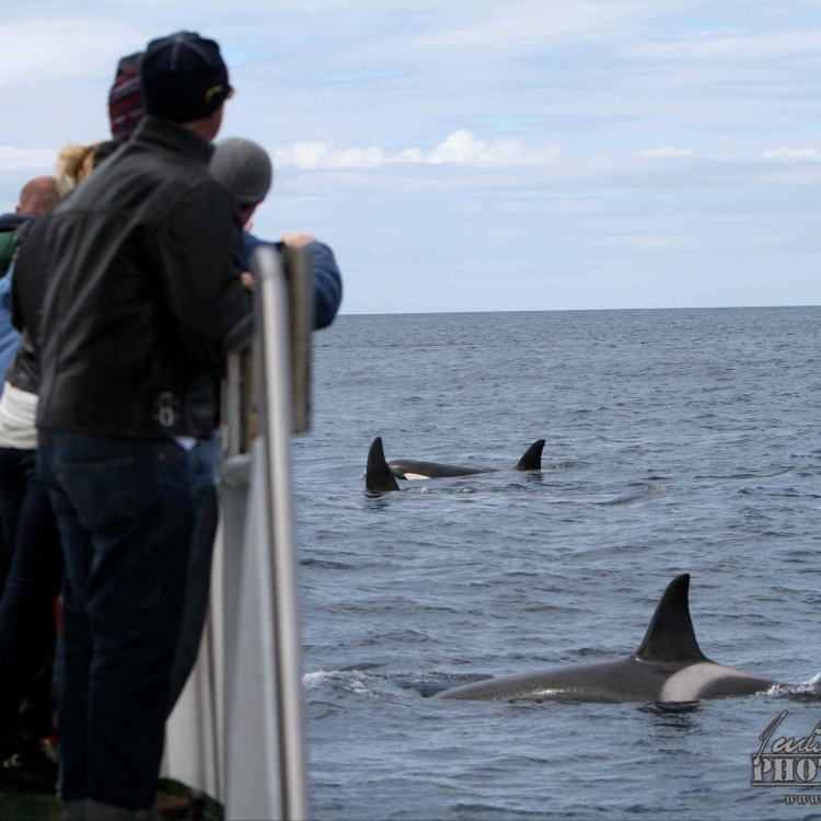 100614 Orcas and people WM