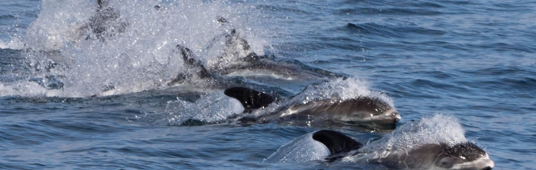 It was a day of pilot whales and dolphins (with the odd humpback)