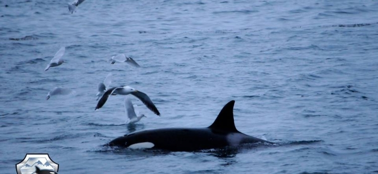 Lucky with the orcas!
