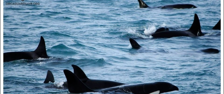 Orcas on both trips!