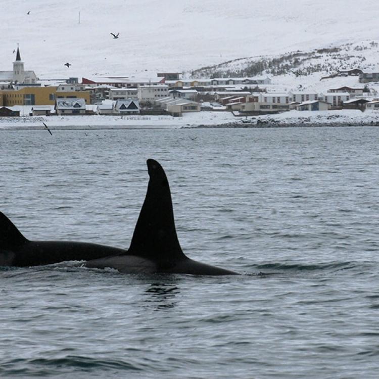 16 March orca - Copy - Copy
