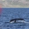 170718 close humpback fluke