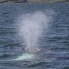 170718 humpback blow
