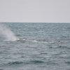 170718 sperm whale blow