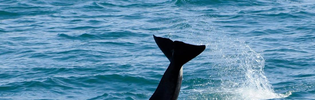 Spotting Orcas