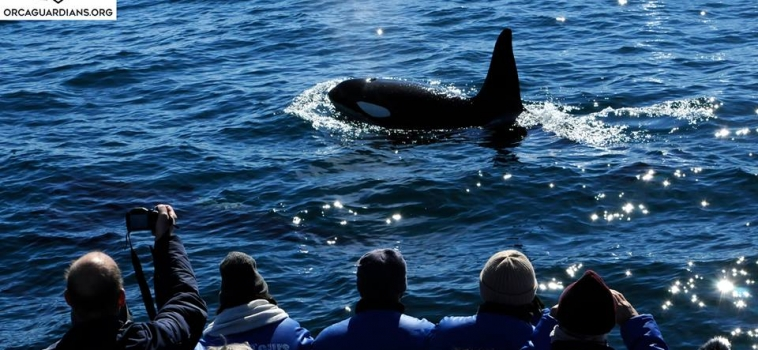 Orca and Sperm Whales