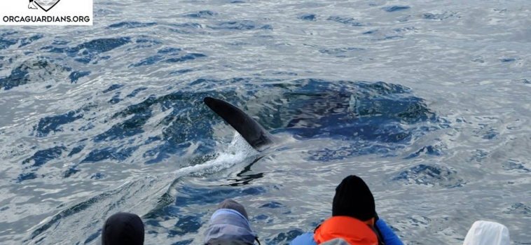 Two very pretty tours today with orcas