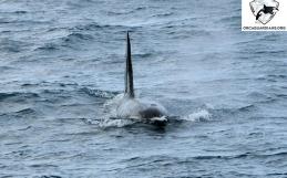 First Minke whale of the season!