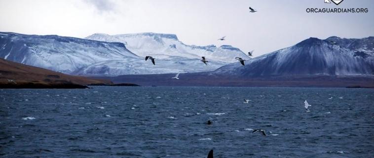 Impressive orca sighting