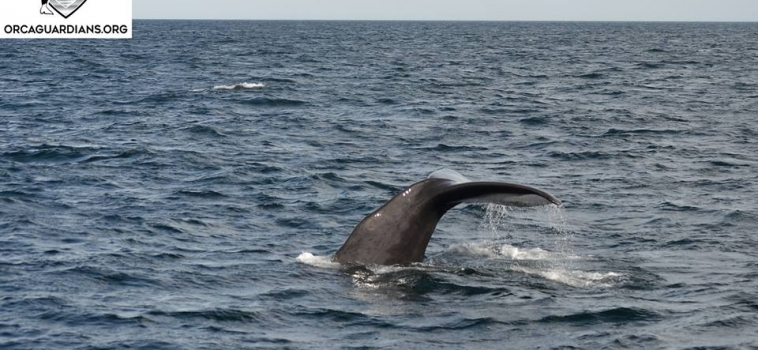 6 Sperm & 6 Orcas