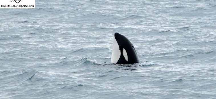 Wonderful encounters with cetaceans on both tours
