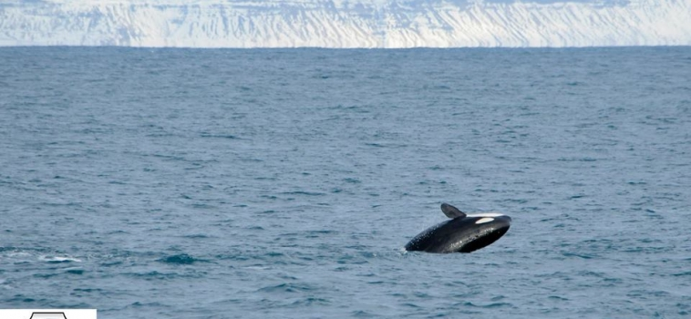 Both our trips we encountered two different kinds of cetaceans