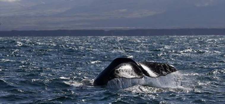Sperm whale day on both tours