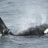 3007 orca 2