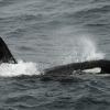 3007 orca 3