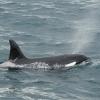 3107 orca