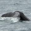 3107 sperm whale