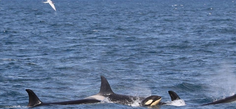 Six species of cetaceans!