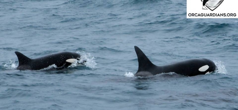 12 orcas!