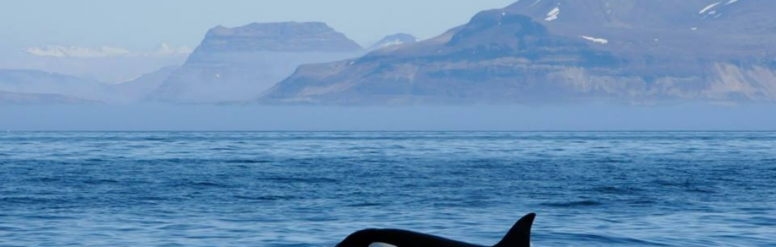 Two orca encounters