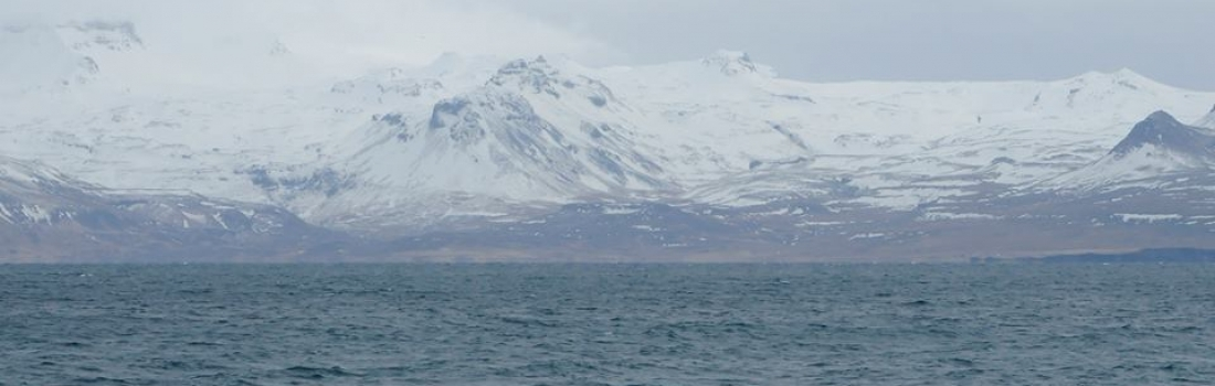 Observed the orcas in front of the snowy Icelandic landscape