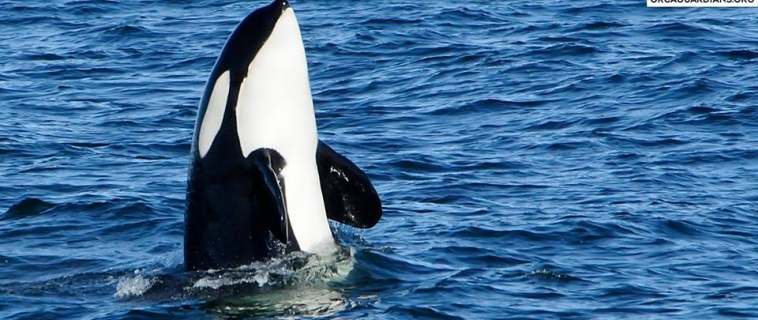 """WHAT A TOUR! maiden voyage of our new whale watching boat """"Íris""""!"""