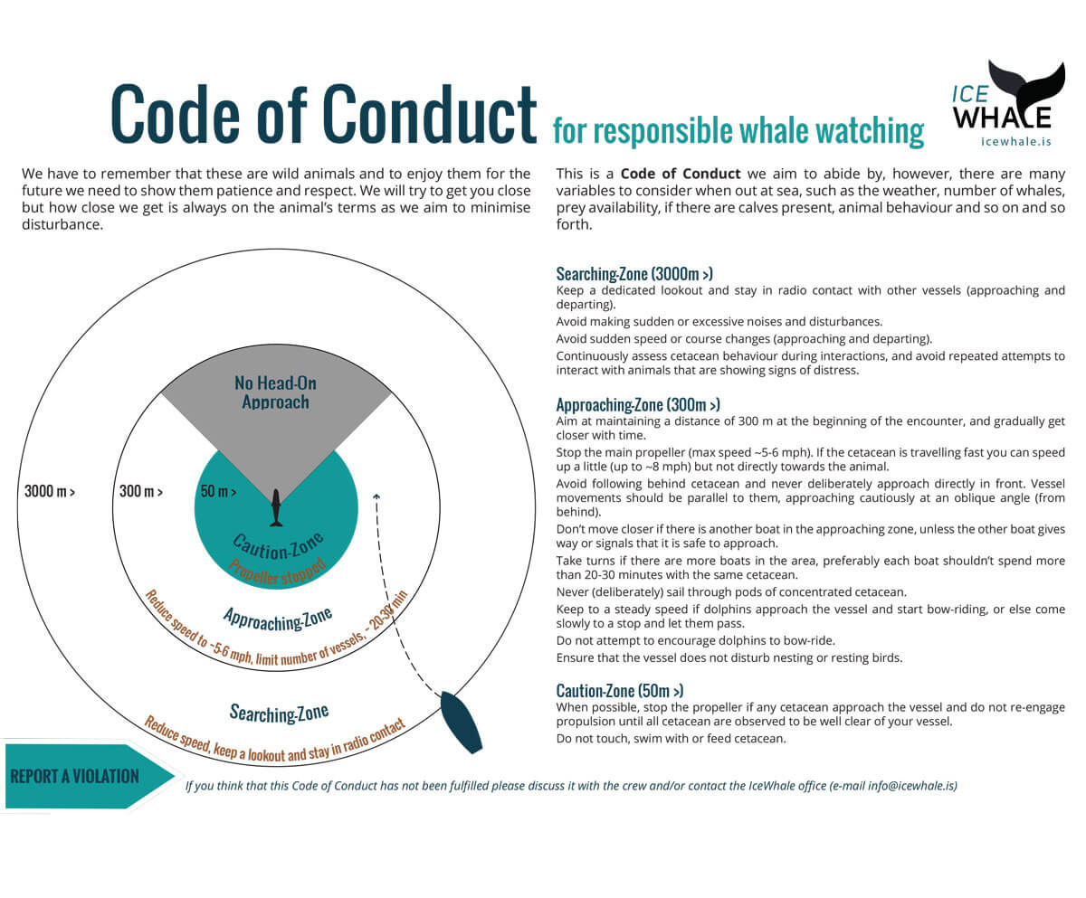 Iceland responsible whale watching - code of conduct