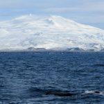 sperm whale snaefellsnes iceland