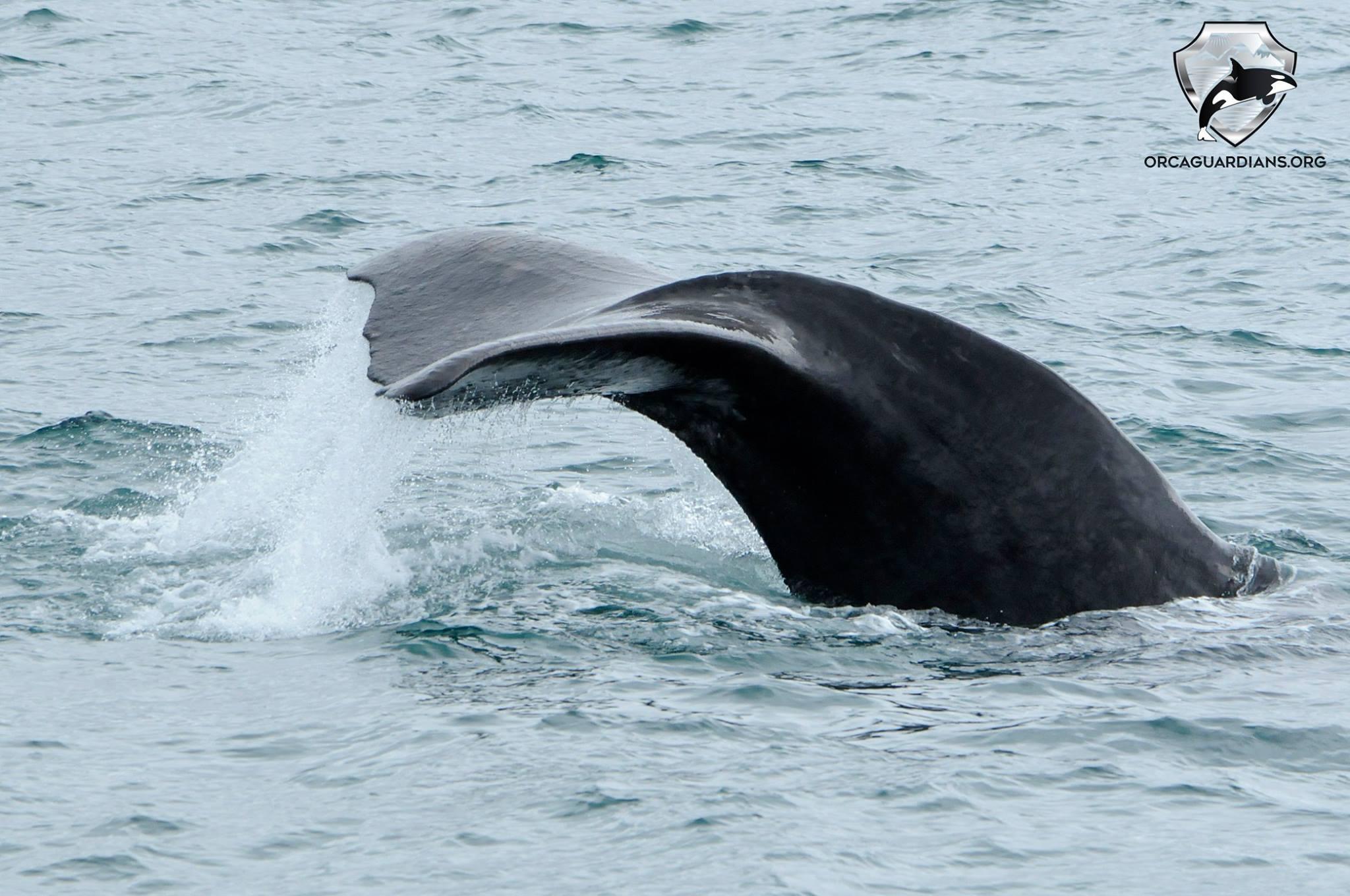 Sperm whale rush hour