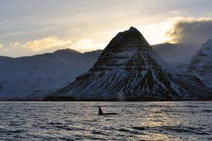 whale watching grundarfjordur