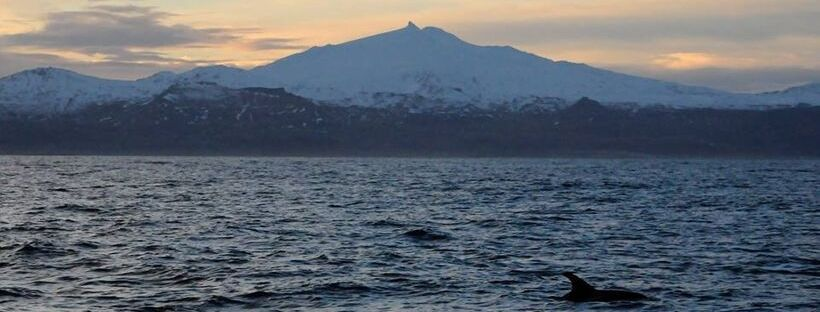 Iceland Whale Watching December 19, 2018