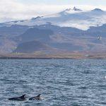 olafsvik whale watching september