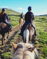 Horseback Riding Holmavik