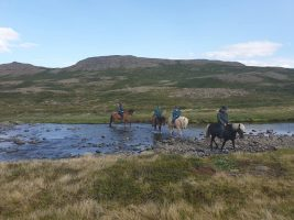 Horseback Riding Westfjords