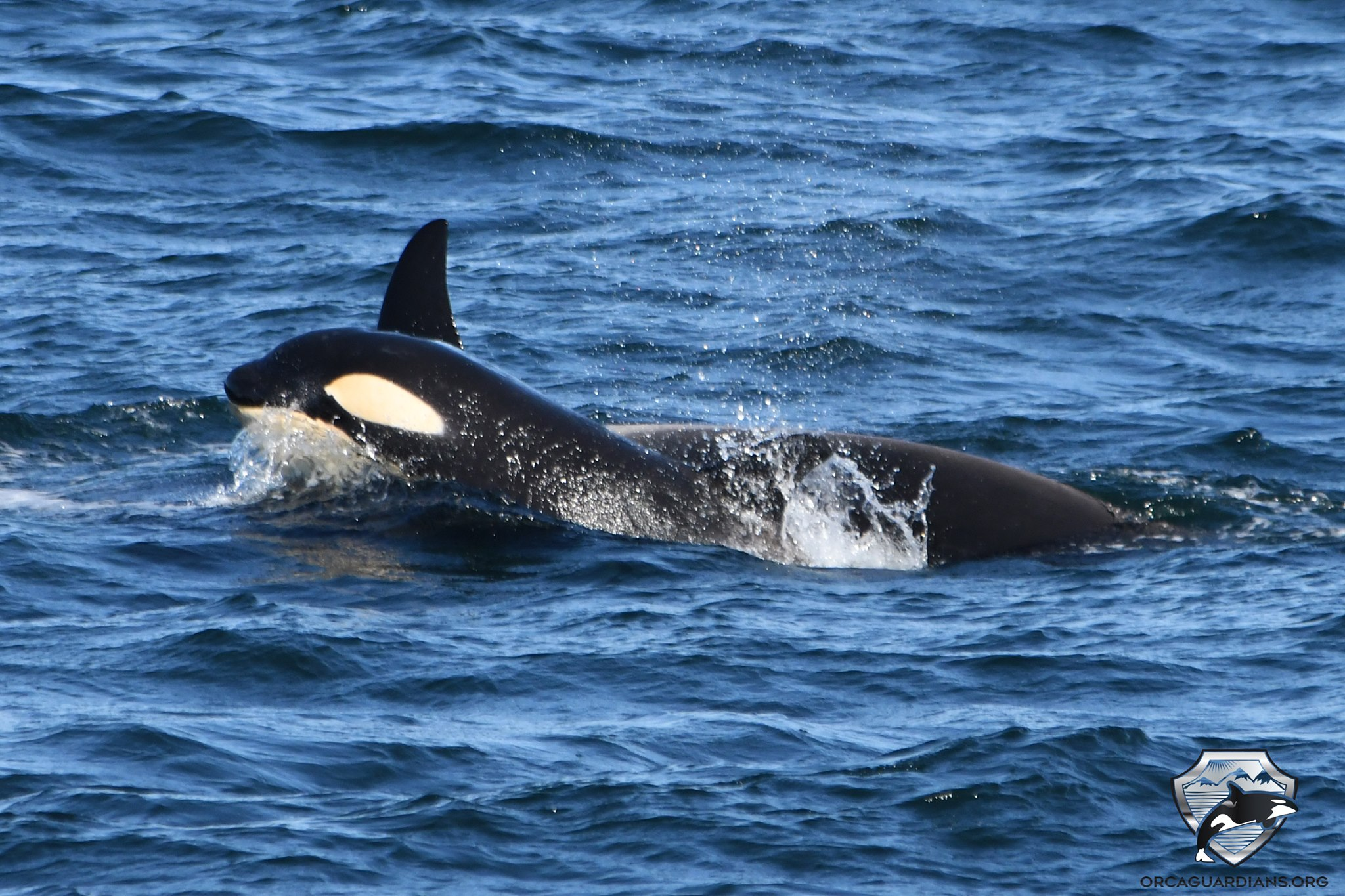 Iceland Whale Watching June – What to Expect on our Whale Tours in Snaefellsnes & the Westfjords in June