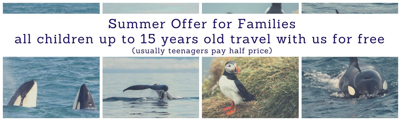 Whale Watching Iceland Discount Offer