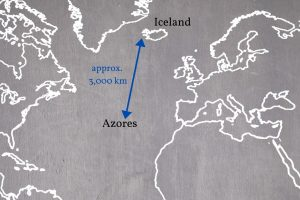 Iceland Sperm Whale Migration