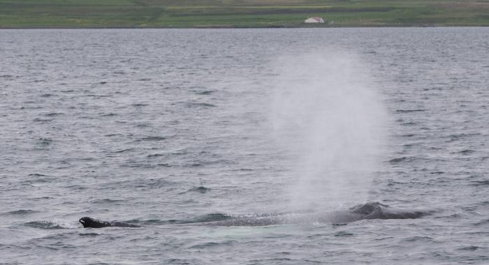 020718 humpback whale