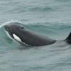 020718 orca 2