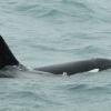 020718 orca