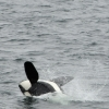 0208 orca breach